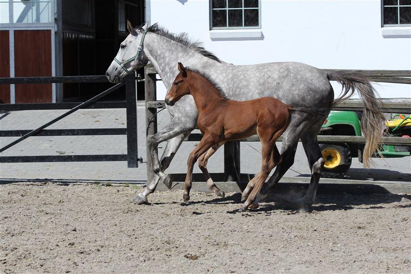 Filou Ask, med Calino Ask e. Cavall Ask