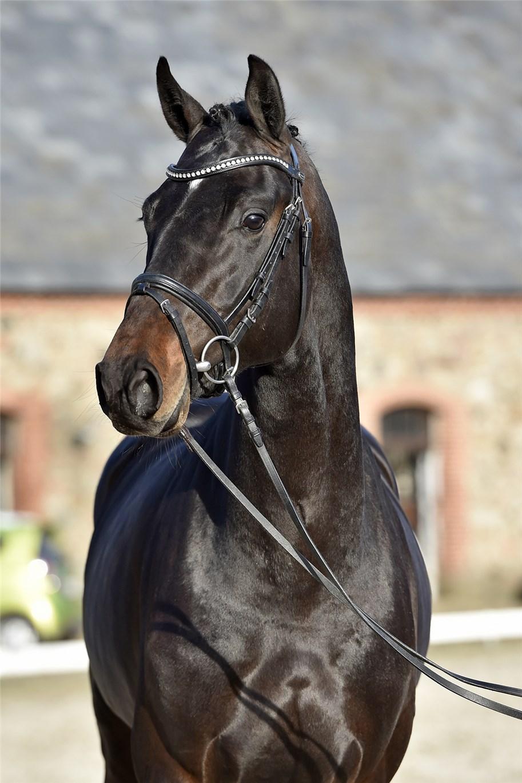 herning hestehospital